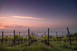 Commencer à apprendre le vin